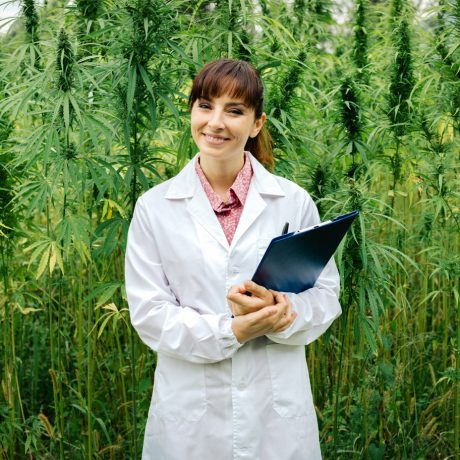 Cannabis Licensing and Compliance